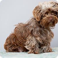 Adopt A Pet :: Delilah - Encino, CA