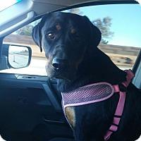 Adopt A Pet :: Mavi - Maricopa, AZ