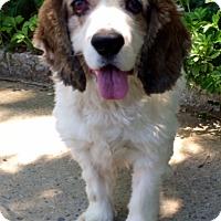 Adopt A Pet :: Tony - Flushing, NY