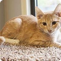 Adopt A Pet :: Jackson - Colorado Springs, CO