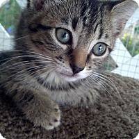 Adopt A Pet :: Watson - Scottsdale, AZ
