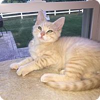 Adopt A Pet :: Tanner - Colmar, PA