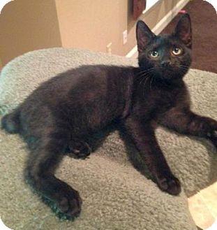 Bobtail Cat Rescue Nc