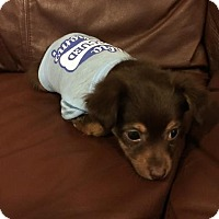 Adopt A Pet :: Nick - Lodi, CA