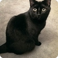 Adopt A Pet :: Duke - Vancouver, BC