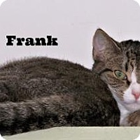 Adopt A Pet :: Drake and Frank - Shaftsbury, VT