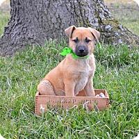 Adopt A Pet :: Hansel - Westport, CT