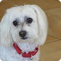 Adopt A Pet :: Quinn - San Antonio, TX