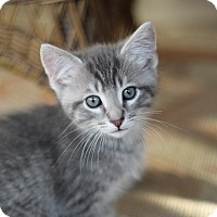 Adopt A Pet :: Cutie Pie (The Pie Babies) - Richmond, VA