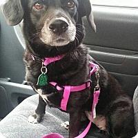 Adopt A Pet :: Roxy - Pembroke, GA