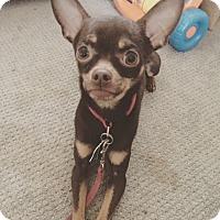 Adopt A Pet :: Piggy *COURTESY LISTING* - New Freedom, PA