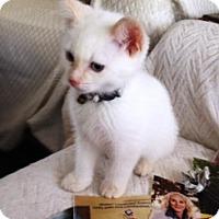 Adopt A Pet :: Miso - Orange, CA