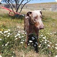 Adopt A Pet :: ZEKE - McKinleyville, CA