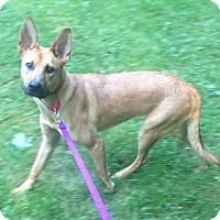 Adopt A Pet :: Madi - Oak Ridge, NJ