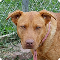 Adopt A Pet :: Princess - Grinnell, IA