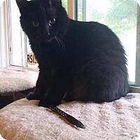Adopt A Pet :: Markham C160229 - Edina, MN