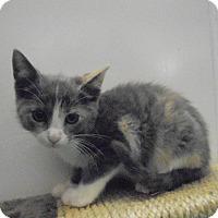 Adopt A Pet :: Abbie - Springfield, TN