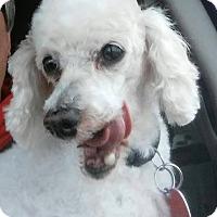 Adopt A Pet :: Spike - Rochester, MN
