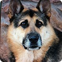 Adopt A Pet :: ROSCOE VON ADELMAR - Los Angeles, CA