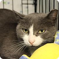 Adopt A Pet :: Pannini - Warwick, RI