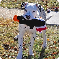 Adopt A Pet :: Charlie - Reisterstown, MD