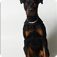 Adopt A Pet :: Emmett - Columbus, OH