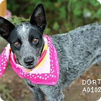 Adopt A Pet :: Dorthy - Spring, TX
