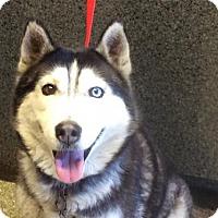Adopt A Pet :: I1266031 - Pomona, CA