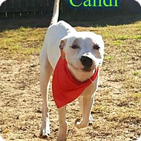 Adopt A Pet :: Candi - Pensacola, FL
