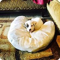Adopt A Pet :: Zayne - Peoria, AZ