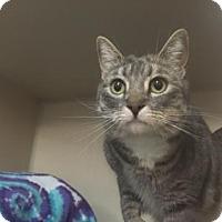 Adopt A Pet :: Kiara - Fort Collins, CO