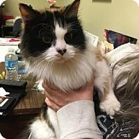 Adopt A Pet :: Gretchen - Adrian, MI