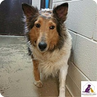 Adopt A Pet :: Breanna - Eighty Four, PA
