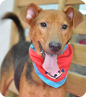 Terrier (Unknown Type, Medium) Mix Dog for adoption in Surrey, British Columbia - Whiskey