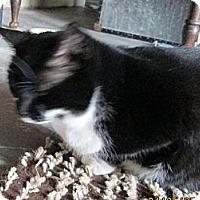 Adopt A Pet :: Xena - Cincinnati, OH