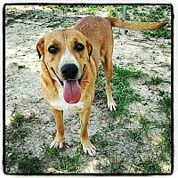 Adopt A Pet :: Peggy Sue - Meridian, MS
