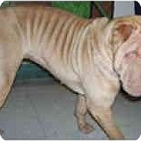 Adopt A Pet :: Zoe - Bethesda, MD