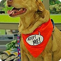Adopt A Pet :: Egan - Piqua, OH