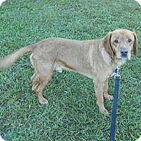Adopt A Pet :: RUSTY - Wilmington, NC
