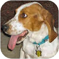 Adopt A Pet :: Summer - Phoenix, AZ