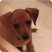 Adopt A Pet :: Stanley - Fresno, CA