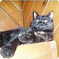 Adopt A Pet :: Gerty - Hamburg, NY