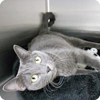 Adopt A Pet :: Erin - Newport Beach, CA