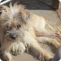 Adopt A Pet :: Sushi-Adoption pending - Norwalk, CT
