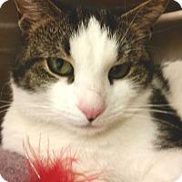 Adopt A Pet :: Sam - Colmar, PA