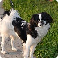 Adopt A Pet :: Miko - ROME, NY