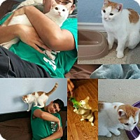 Adopt A Pet :: Mildred - DFW Metroplex, TX