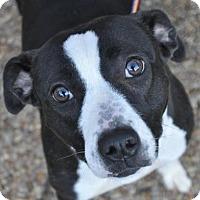 Adopt A Pet :: Zoey - Atlanta, GA