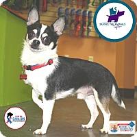 Adopt A Pet :: Shaq - Carlisle, TN