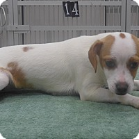 Adopt A Pet :: Bubbles - Manning, SC